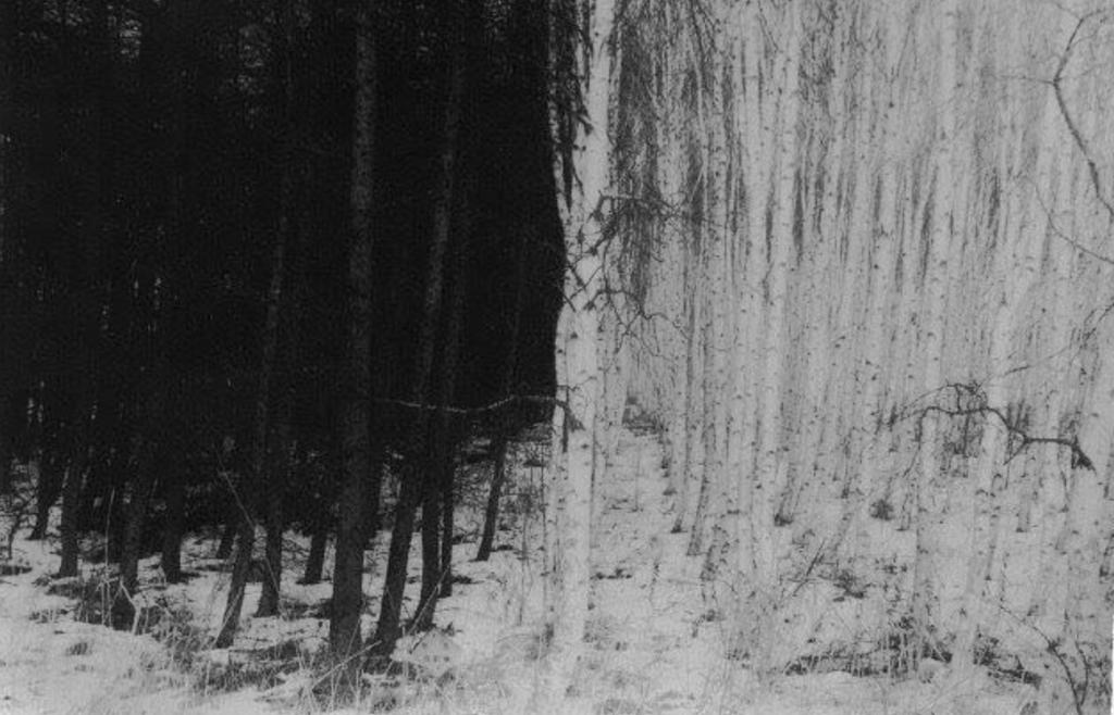 Into woods de Masao Yamamoto