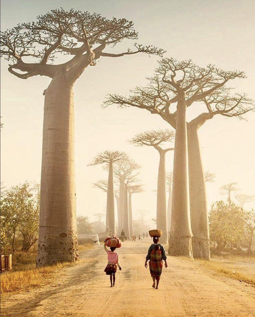 Allée des baobabs , Madagascar par Justin Foulkes